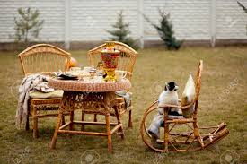 Cat On Rocking Chair Outdoors. Wicker Furniture On Picnic.