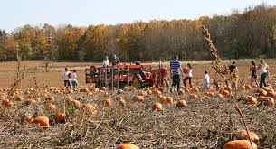 Pumpkin Farms In Bay County Michigan by Jim U0027s Pumpkin Farm