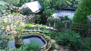Jaya Secret Garden: A Diversified Organic Backyard Farm ... Best 25 Urban Farming Ideas On Pinterest What Is Organic Farming In The Philippines Reality Tv Episode 17 Fishy The Backyard Homestead Produce All Food You Need Just A Gardening Aquaponics Tips Youtube Cheap Methods Find Deals Easy Home Office Backyards Cozy In Eco Pics On 665 Best Gardening Images Benefits 171 Garden Pests Pests