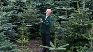 Best Real Christmas Tree Type Canada by Which Are Greener Real Or Artificial Christmas Trees