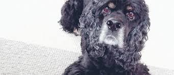 gewöhne deinem hund das bellen an der tür ab tierisch wohnen