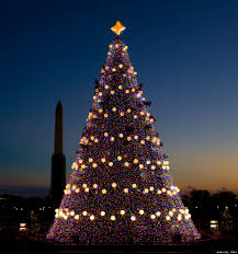Sams Club Christmas Trees 12 Ft by Christmas Tree Evolution