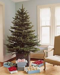 How To Pick Out A Christmas Tree