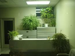 Plants in bathroom no light