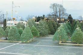 Balsam Hill Christmas Trees For Sale by Wahmhoff Farms Nursery