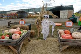 Denver Area Pumpkin Patches by Your Ultimate Guide To Autumn Activities And Seasonal Fun In