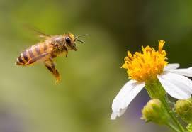 will diatomaceous earth kill honeybees planet