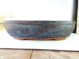 pot bonsai grande taille pots ovales
