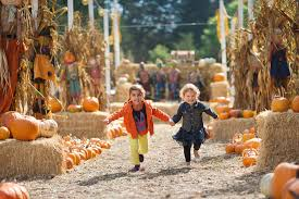 Napa Pumpkin Patch Hours by 17 Pumpkin Patches In Central Arkansas To Visit This Fall Little