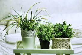 dormir avec une plante dans la chambre 5 plantes d intérieur pour décorer la chambre à coucher et nous