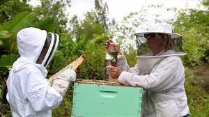 Backyard Beekeepers Are Buzzing!   WLRN Diy Small Backyard Ideas Archives Modern Garden Recent Blog Posts Move Smart Solutions Blog Drone Defence Vr Gear Sneaky Flying Drones Want To Snoop Your Backyard Bkeepers Are Buzzing Wlrn Defend Territory In Turret Defense Game How Ppare Your Survive Winter Readers Digest June 2015 Thegenerdream Weeds Honey Bees Love My Adventures Bkeeping Buzzing Abhitrickscom 25 Ways To Seriously Upgrade Familys 13 Things Landscaper Wont Tell You Spring Is With Bees Rosie The Riveters