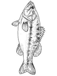 Basses Coloring Pages 10