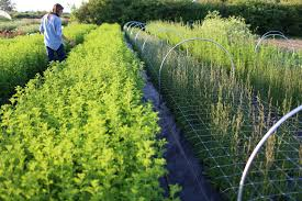 Garden Planning: Part 2 Define And Assess - Floret Flowers Bring The Farm To Your Backyard Innovation Smithsonian Guide Growing Rice Southern Exposure Seed Exchange Simple Vegetable Garden Monoculture Farming Has Been Taking A Toll On Farm Soil Hemp With Cabbage In Burgundy In Our A Weekend Willamette Valley 5 Cash Crops You Can Grow Gtblog Cowpea Annual Crop Stock Photo Picture And Plant And Manage Cover For Maximum Weed Suppression Extension Greenhouse Ftilizer Plants Flowers Landscaping Frontyard Three Things Very Dull Indeed Corn Backyard 2016 Weeks