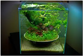 October 2010 Aquascape Of The Month: