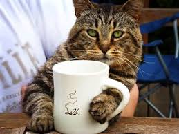 cat coffee up and smell the coffee kitty with cats