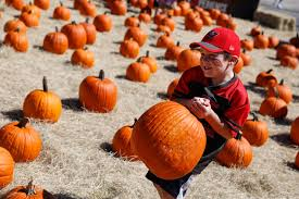Pumpkin Patch Near Bay Area by Our 2017 Tampa Bay Pumpkin Patch Corn Maze And Fall Festival Guide