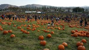 Cal Poly Pomona Pumpkin Patch Promo Code by Cal Poly Pumpkin Patch Yelp