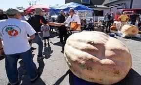 Worlds Heaviest Pumpkin Pie by Rhode Island Man Who Grew 2 000 Pound Pumpkin Shares His Secrets