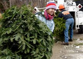 Christmas Tree Farms Albany County Ny by Christmas Trees Ground Into Mulch For Broadalbin Nature Trail
