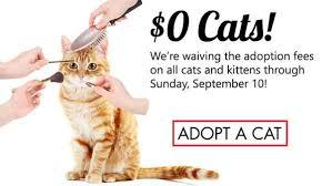 adopt a cat cat adoption pet rescue in