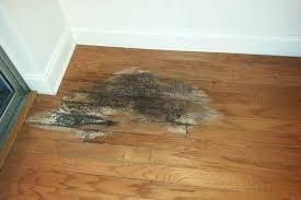 Hardwood Floor Buckled Water by Floor Hardwood Floor Water Damage Innovative Hardwood Floor Water