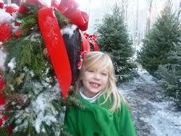 Fraser Christmas Tree Farm Ripon Wi by Pre Cut Christmas Trees Christmas Lights Decoration