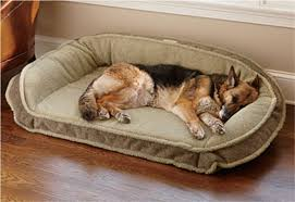 Best Ideas for Foam Dog Bed