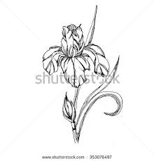 Vector Decorative Of Iris Flowers Coloring Pages Book For Adult