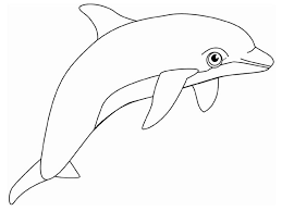 Dolphin Coloring Pages Printable