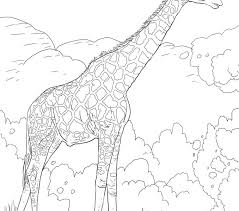 Safari Coloring Pages Animals Free Printable Pictures