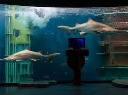 grand aquarium de malo anneaux des mers grand aquarium de malo