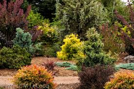 Garden Design: Garden Design With Fern Garden Ideas Foliage Garden ...