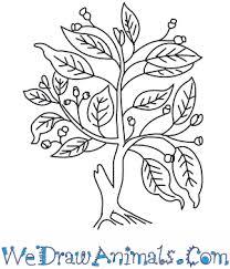 fig tree thumb
