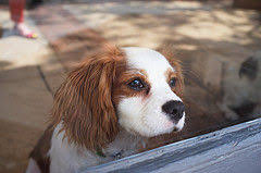 Best House Dogs That Dont Shed by Cheap Dogs Top 10 Budget Friendly Pooches Care Com Community