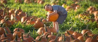 Sunnyside Pumpkin Patch by Cal Poly Pomona