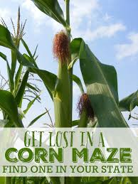 Pumpkin Farm In Maple Park Il by Best Corn Maze List