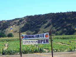 Pumpkin Patches Maryland by Pumpkin Patch In Redlands Yucaipa Ca 2013