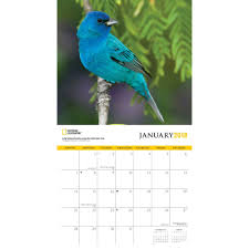 National Geographic Backyard Birds Wall Calendar 2018 | Zebra ... National Geographic Backyard Guide To The Birds Of North America Field Manakins Photo Gallery Pictures More From Insects And Spiders Twoinone Bird Feeder Store Birds Society Michigan Mel Baughman Blue Jay Picture Desktop Wallpaper Free Wallpapers Pocket The Backyard Naturalist 2017 Cave Wall Calendar