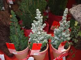 Slimline Christmas Tree Asda by Where To Buy A Mini Christmas Tree Christmas Lights Decoration
