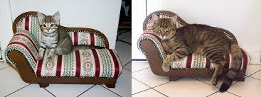 cat sofa kría the cat and sofa aww
