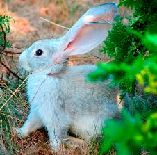 Can Rabbits Eat Pumpkin Seeds by How To Attract Squirrels Chipmunks And Rabbits To Your Yard Pet