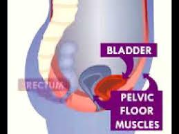 best pelvic floor exercises for prolapse and overactive bladder