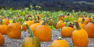 Free Pumpkin Patch Charleston Sc by Celebrate Charleston U0027s Fall Harvest Vacation Differently