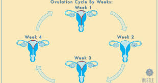 Thick Uterine Lining Shedding During Period by How Your Menstrual Cycle Affects You Each Week Or What To Expect