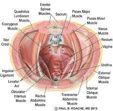 43 best pelvis images on pinterest fitness exercises pelvic