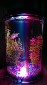 46 Inspiring Fish Tanks For The Aquatic Lover In You ... | Fish ... I Really Want A Jellyfish Aquarium Home Pinterest Awesome Fish Tank Idea Cool Ideas 6741 The Top 10 Hotel Aquariums Photos Huffpost Diy Barconsole Table Mac Marlborough Tank Stand Alex Gives Up Amusing Experiments 18 Best Fish Images On Aquarium Ideas Diy Clear For Life Hexagon Hayneedle Bar Custom Tanks Ponds Designs For Freshwater Modern 364 And Tropical Ov Cylinder 2