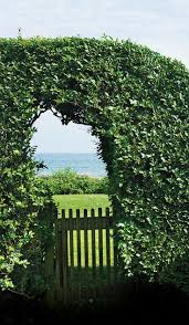 4196 Best Gardens And Gardening Images On Pinterest | Gardens ... Home Vegetable Garden Tips Outdoor Decoration In House Design Fniture Decorating Simple Urnhome Small Garden Herb Brassica Allotment Greens Grown Sckfotos Orlando Couple Cited For Code Vlation Front Yard Best 25 Putting Green Ideas On Pinterest Backyard A Vibrantly Colorful Sunset Heres How To Save Time And Space By Vertical Gardening At Amazoncom The Simply Good Box By Simplest Way Extend Your Harvest Growing Coolweather Guide To Starting A
