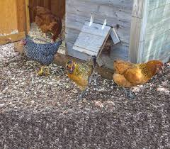 Campus Chickens Combat Climate Change — The Jewish Outlook Chickens Make Me Happy 28 Best Broken Arrow Backyard Images On Pinterest Austin The Pros And Cons Of Popsugar Home Coop De Ville In Tx Page 4 Backyard The Doodle House Instagram Photos Videos Tagged With Atxlocal Snap361 Texas Flock Sell Out Cdc Links To Nationwide Salmonella Outbreaks In Your Program Hatches Oct 13 Backyards Modern Landscape Design Ideas Stone Fire Pits Water