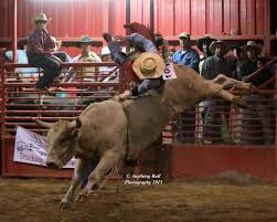 100 Livingston Trucking Anything Bull Or Rusty Cody Goodman 101