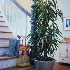 birkenfeige bild 6 living at home